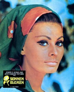 Sunflower Sophia Loren in