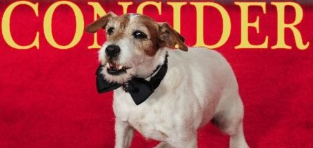 Consider Uggie, Day 7: Is Artist Wonder Dog 'Facing Retirement'?